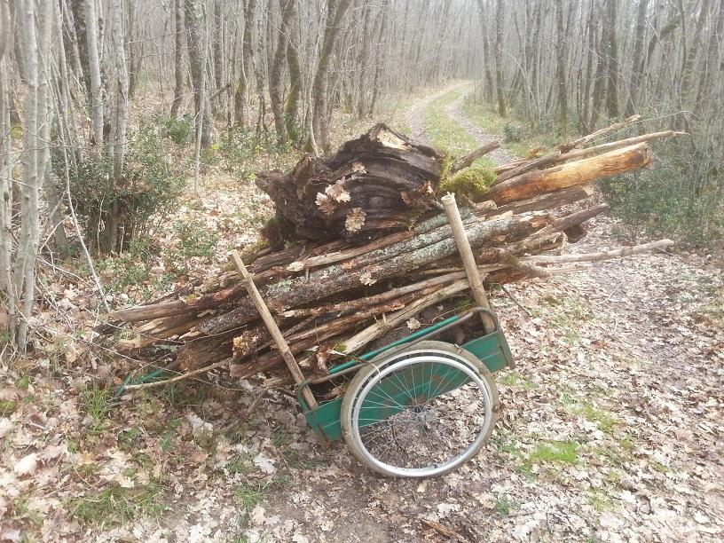 Permaculture promenons nous dans les bois avenir positif for Permaculture terrasses et buttes